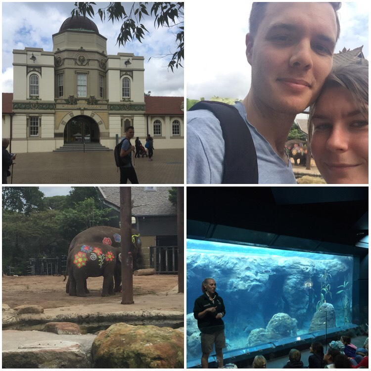 A collage of four pictures. Top left is the front gates of Taronga Zoo, Top right is a selfie of a white man and woman, both with brown hair. They are smiling and leaning close to be in the frame. Bottom left is two elephants with flowers painted on them. Bottom right is a man speaking in front of a glass aquarium to a group of children seated on the floor